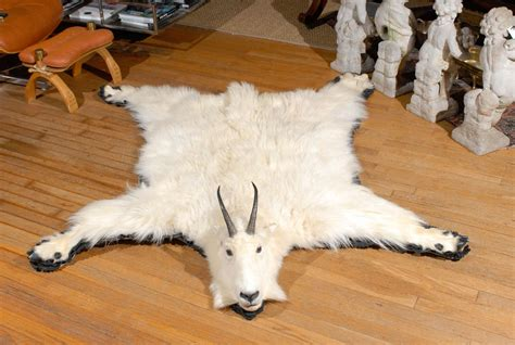 goat rug white mountain goat taxidermy rug at 1stdibs