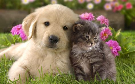 cat and cuddling hd dogs wallpapers and photos hd animals wallpapers