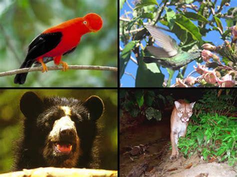 imagenes de animales nativos del peru machu picchu flora and fauna inca trail