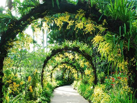 My Botanical Garden Singapore Botanic Gardens Things To Do In Botanic