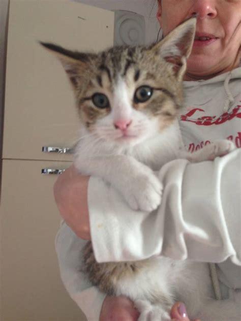 alimentazione gatto 2 mesi gattini di 1 2 e 3 mesi