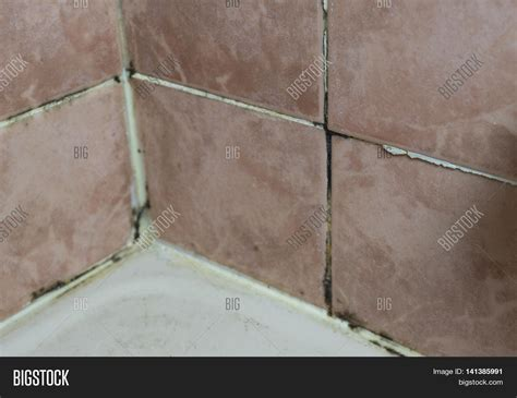 black mold on walls in bathroom black mold growing on shower image photo bigstock