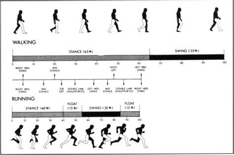 swing phase of walking foot biomechanics during walking and running mayo clinic