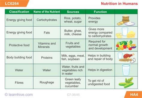 carbohydrates for class 7 learnhive icse grade 7 biology nutrition in animals and