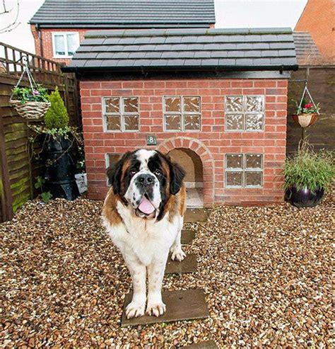 st bernard dog house custom made dog kennels brisbane area general dog discussion dogz online forums