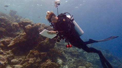 marine biologist description marine biologist responsibilities marine world