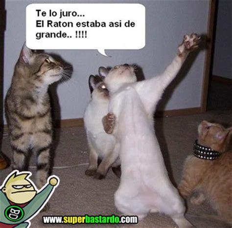 imágenes para whatsapp graciosas chistosas y de risa fotos graciosas de gatos