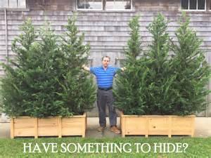 portable privacy screen planter rentals darts tree farm