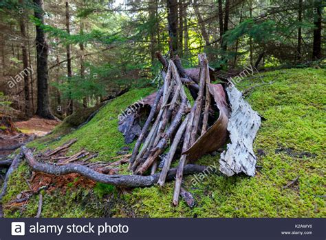 house in the woods maine house in the woods stock photos house in the woods stock images alamy