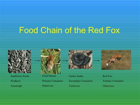 fox food 02 the fox hotel claire bio2 ecology
