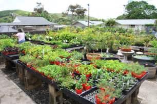 home gardening garden of zalman silber a home and garden by zalman