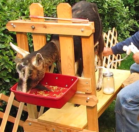 new year make a goat mobile the henry milker how to build a goat stand