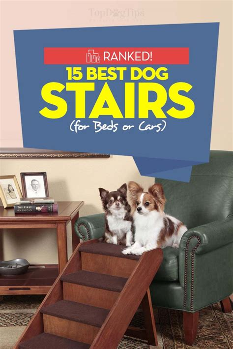 stairs for car top 15 best stairs for bed or car in 2017 large and small dogs
