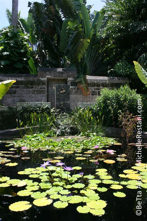 Fairchild Garden City by 20 Best Images About Fairchild On Trees
