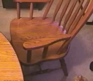 cat on chair gif cat gif find on giphy