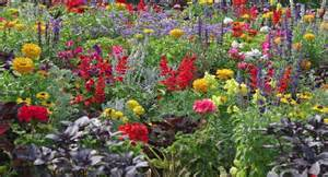 annual flowerbed combintions for sun