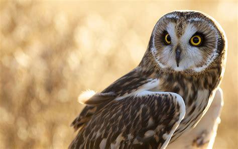 owl bird look 7040772