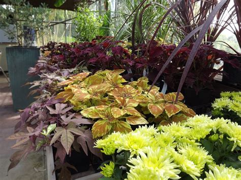 Tropical Planting Scheme - 17 best images about the nursery urban jungle on pinterest hail storm the office and exotic