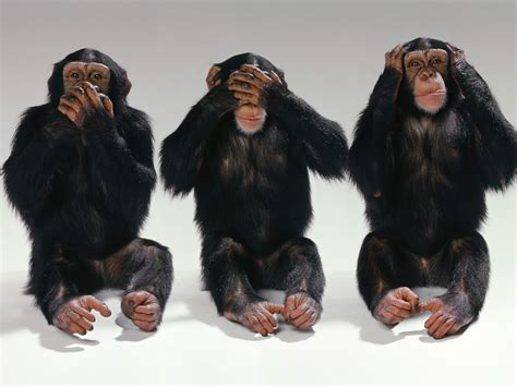 monkeys images see no evil hear no evil speak no evil hd
