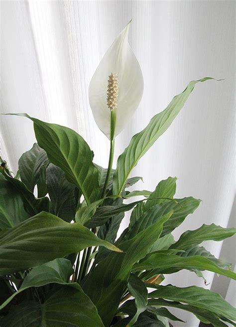 easy care flowering shrubs easy care flowering house plants creative