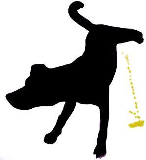 hund pinkelt in wohnung wenn er alleine ist hund pinkelt in die wohnung tipps und hilfe