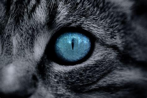 Cat Eye Blue Berkualitas blue cat eye up www imgkid the image kid has it