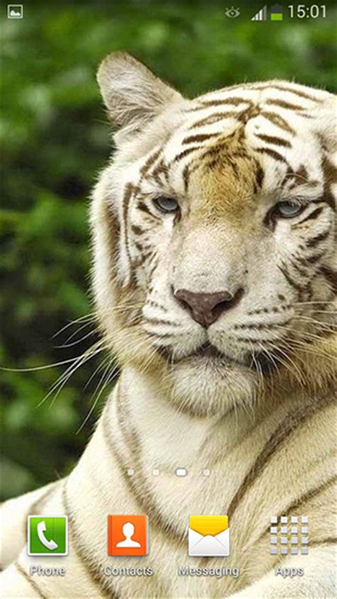 White Tiger L by White Tiger Pour Android 224 T 233 L 233 Charger Gratuitement Fond