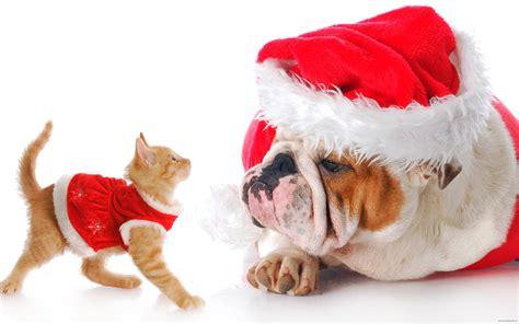 christmas animals memes