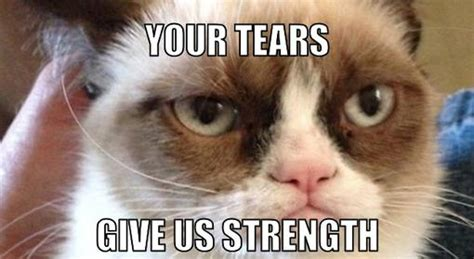 Angry Cat Meme Generator - 40 grumpy cat memes that you will love fallinpets