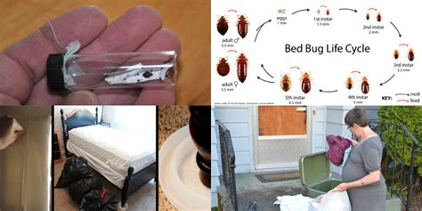 bed bugs bomb bed bug bombs do they work hot shot fogger bug bomb in
