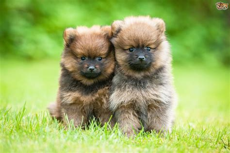 things to get for a new puppy buying a puppy the most important questions to ask the breeder pets4homes