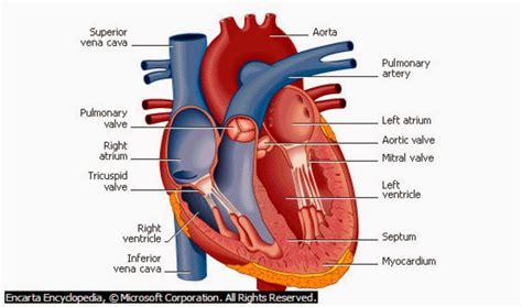penyakit jantung dan makanan untuk mencegah serangan