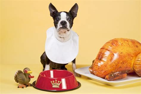 is turkey ok for dogs thanksgiving food safe for dogs k9 carfence