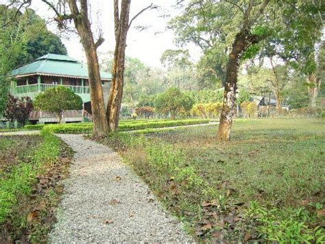 forest bungalow in west bengal the bungalow compund picture of gorumara forest