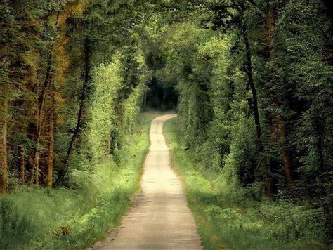 la camino caminos i una pista a trav 233 s bosque nunatak