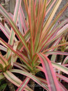 succulent plants  clean  air desert succulents