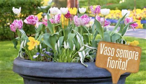 vasi per bulbi bulbi in vaso come piantarli per avare un vaso sempre