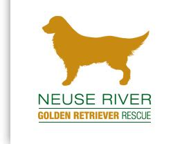 raleigh golden retriever golden retriever rescue raleigh assistedlivingcares