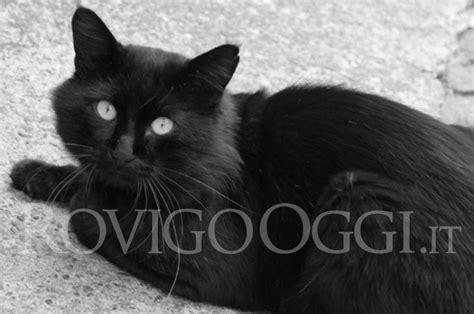 gatto nero testo uccide un gatto nero sbattendone la testa sull asfalto