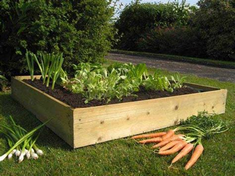 Beginners Gardening Kit Timber Raised Bed With Soil Seeds Raised Bed Vegetable Garden Soil