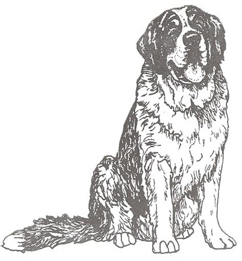 beethoven dog coloring page 1000 images about beethoven on pinterest bernard dog