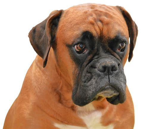 Dog Breeds – GODOGY