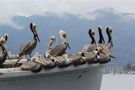 boat insurance tips and suggestions pest control tips for boaters boatus magazine