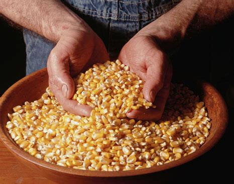 Corn Research Paper by Chmcourseworkbsl Web Fc2 Corn Research Papers