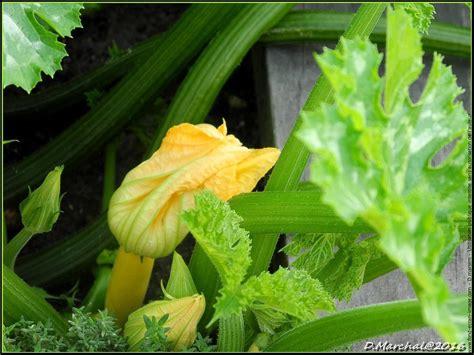 Vegetable Gardening Wallpaper Www Imgkid Com The Image Vegetable Garden Wallpaper
