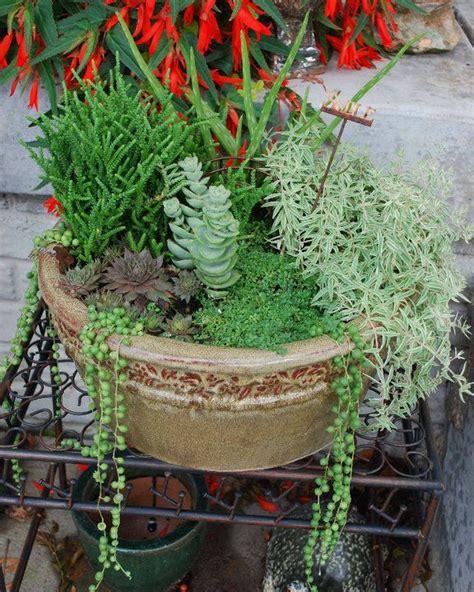 Succulent Dish Garden Ideas Dish Garden Garden Ideas Pinterest Gardens There And The O Jays