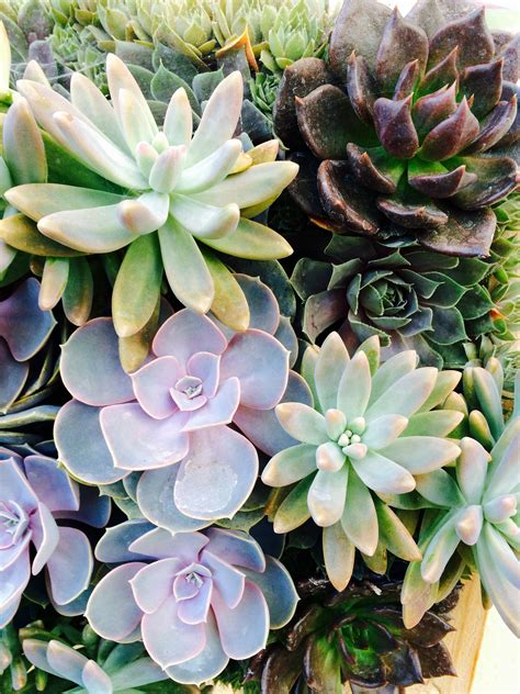 how to propagate succulents baxter gardens