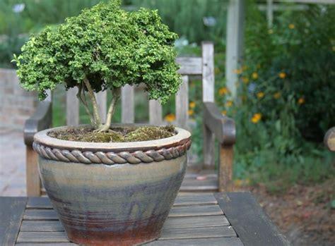 winterharte balkonpflanzen bilder winterharte k 252 belpflanzen das gr 252 n im garten erhalten