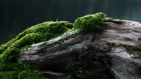 wallpaper landscape tree stump rock grass branch