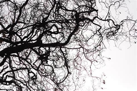 wallpaper ranting daun gambar pohon alam outdoor cabang bayangan hitam